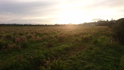 Le terrain, la nature