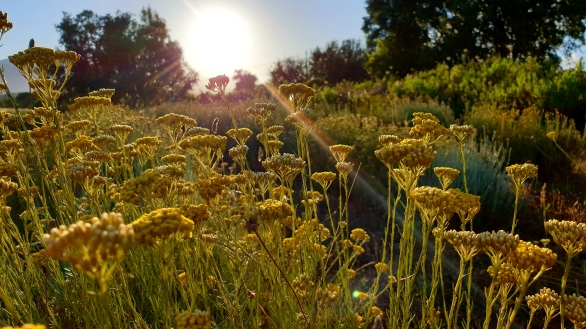 CORSICA Couché de soleil sur les Immortelles